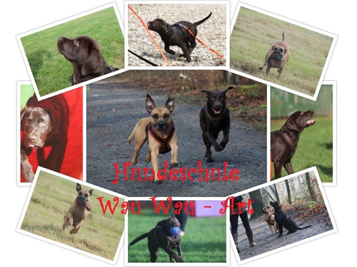 Training für Mensch & Hund